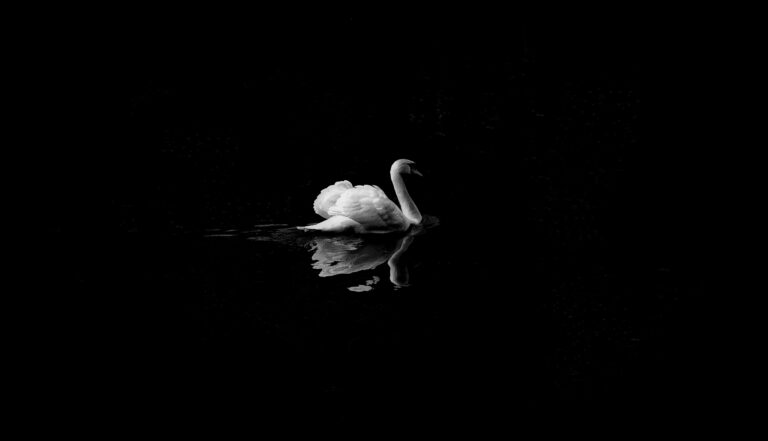 A swan glides over dark water.