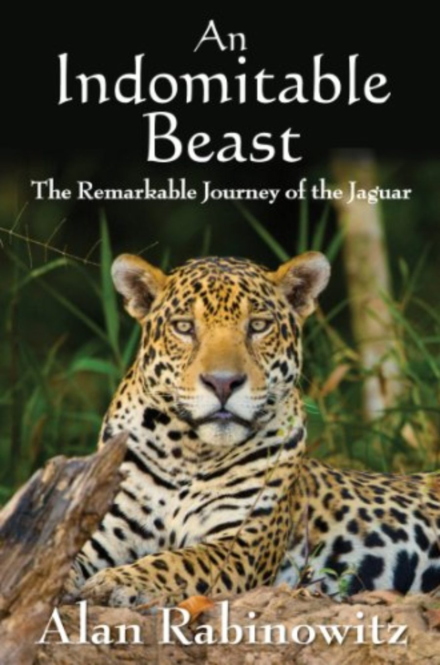 Cover of An Indomitable Beast: The Remarkable Journey of the Jaguar