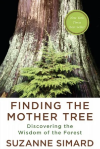 Cover of Finding the Mother Tree: Discovering the Wisdom of the Forest